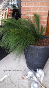 greenery for outdoor arrangement