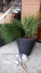 veregated boxwood in outdoor arrangement
